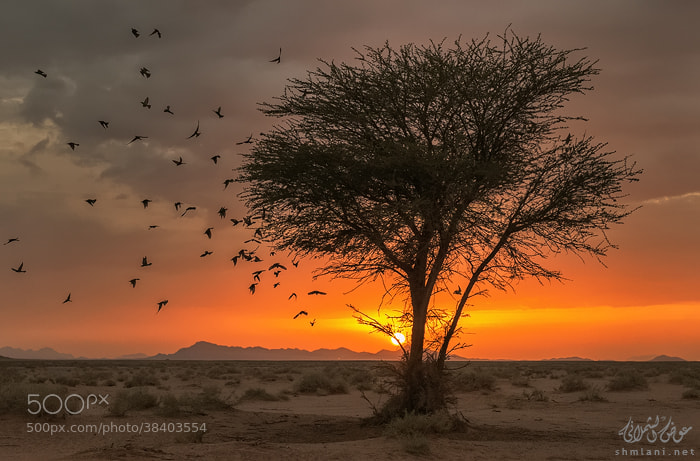 Photograph Before sunset by Awadh alshmlani on 500px