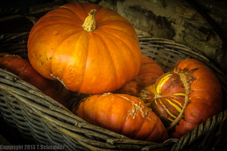 Photograph Pumpkins by tschnaider on 500px