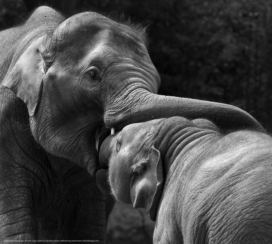 Photograph Elephant play by K J on 500px