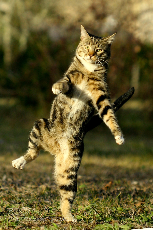 Photograph Une danse? by jonathan merzeau on 500px
