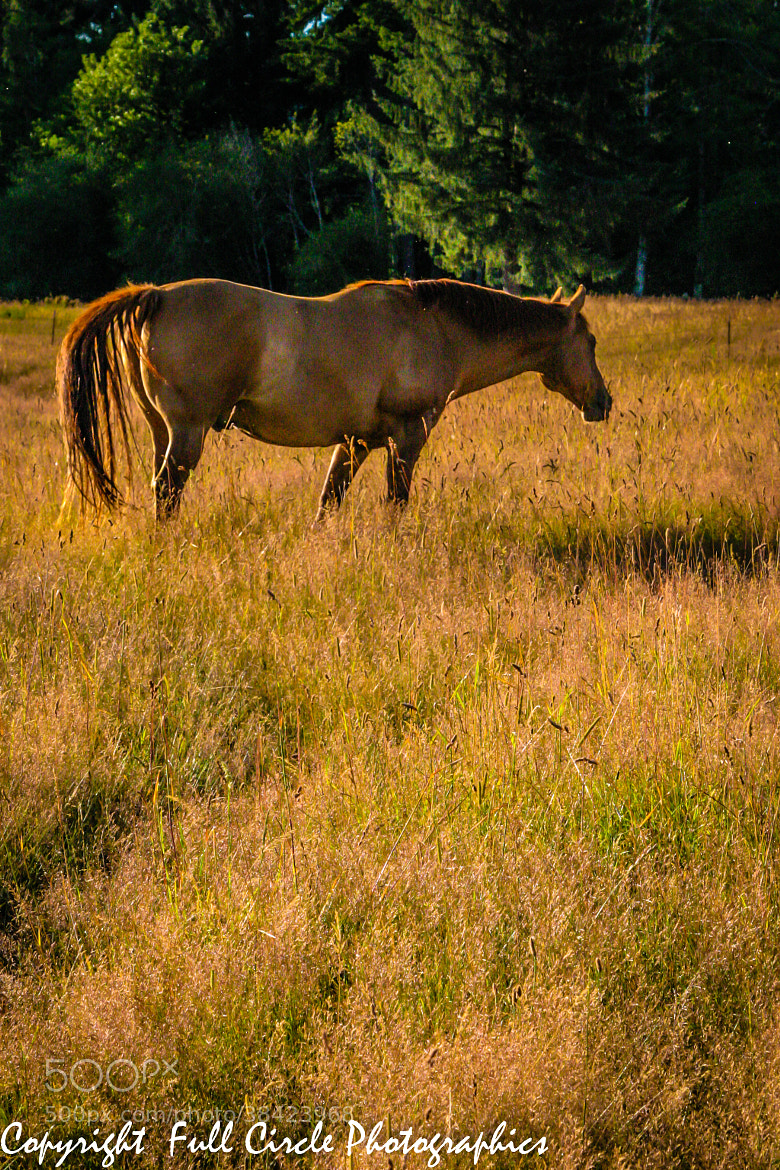 Photograph Summer Pasture II by Pandyce McCluer on 500px