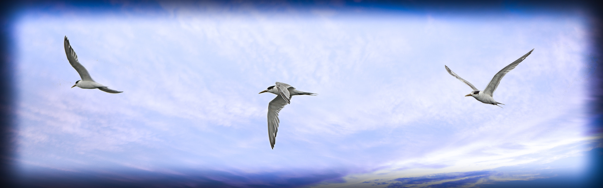 Photograph Passing Tern Panorama by Peter Knol on 500px