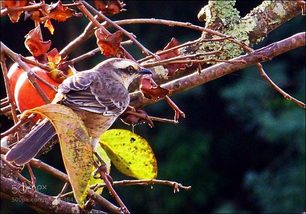 Photograph Bird... by Beto Simões on 500px