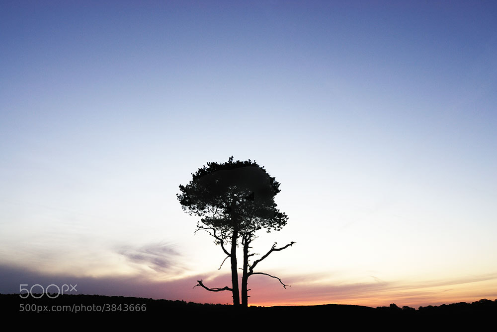 Photograph Lone tree by Tony  on 500px