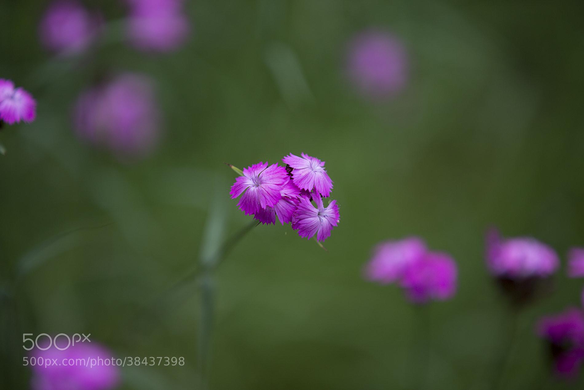 Photograph flower by Thomas Kindmann on 500px