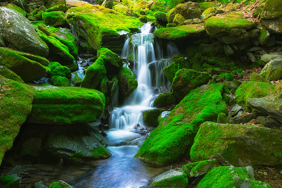 Photograph Water fall in the moss valley by Dante JKPix on 500px
