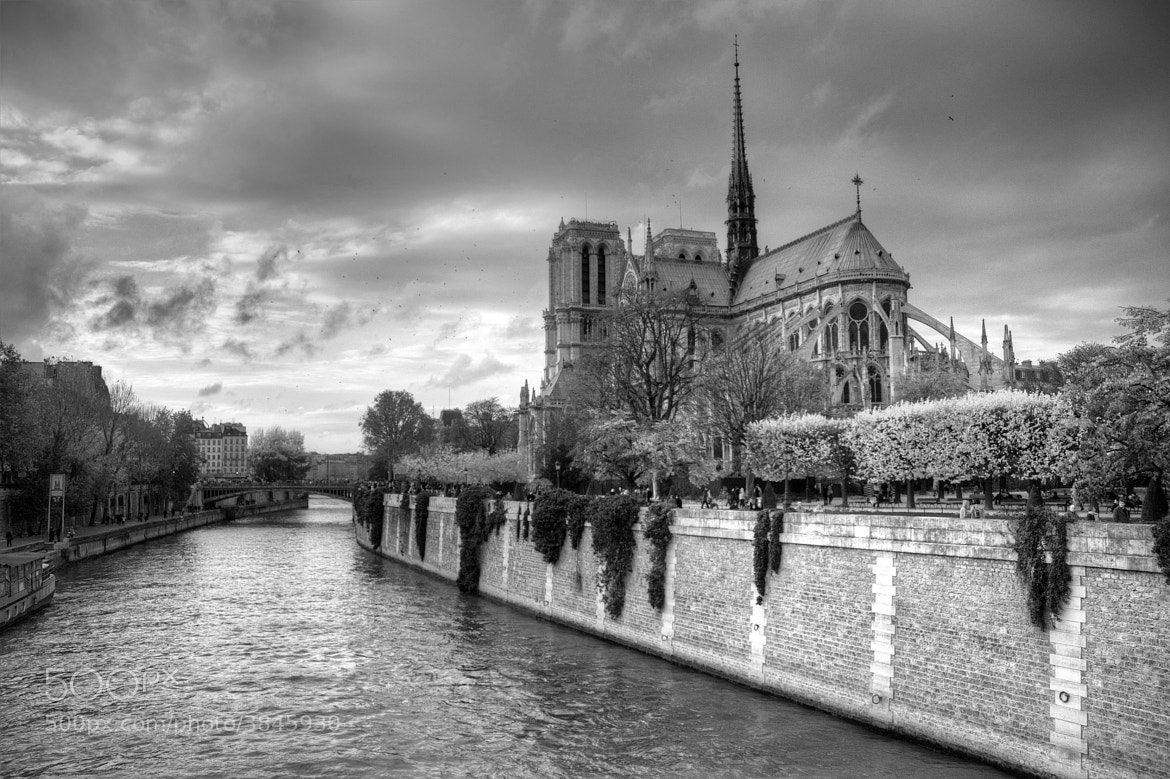 Photograph Notre-Dame in Autumn by Michel Desjardins on 500px