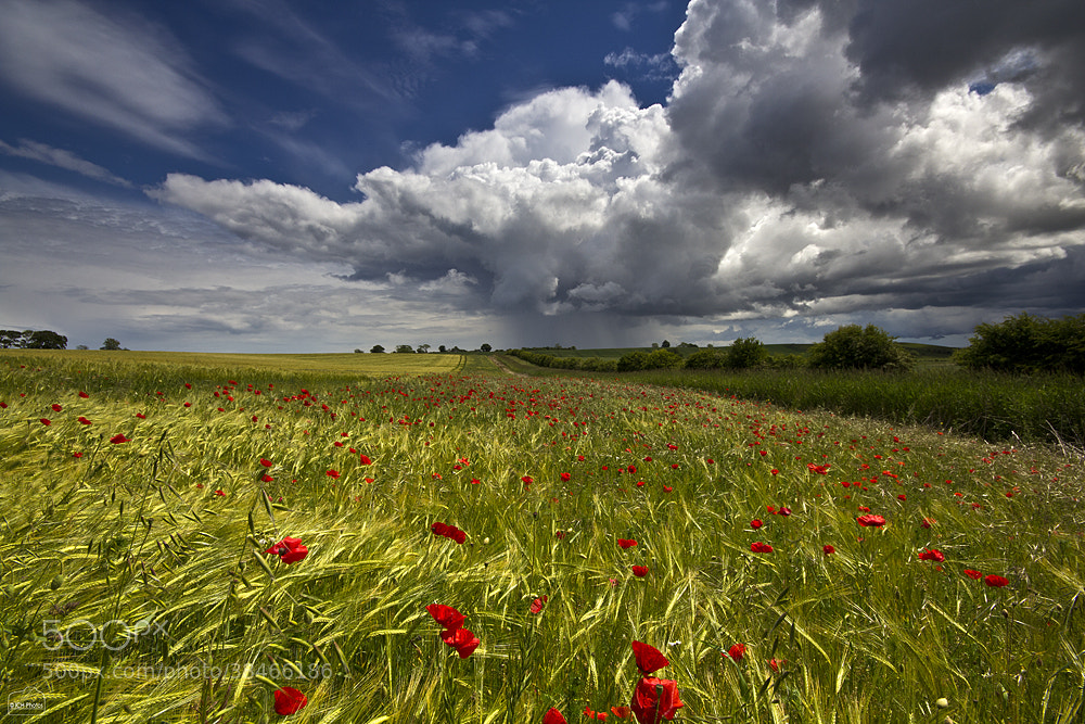 Photograph Poppies and showers by Iain Huitson on 500px