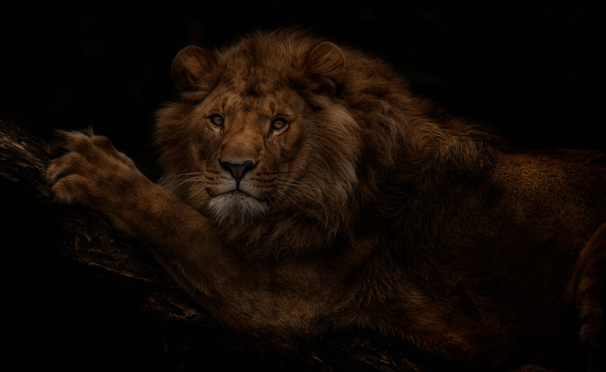 Photograph The Lion's Tree by Denis Van Linden on 500px