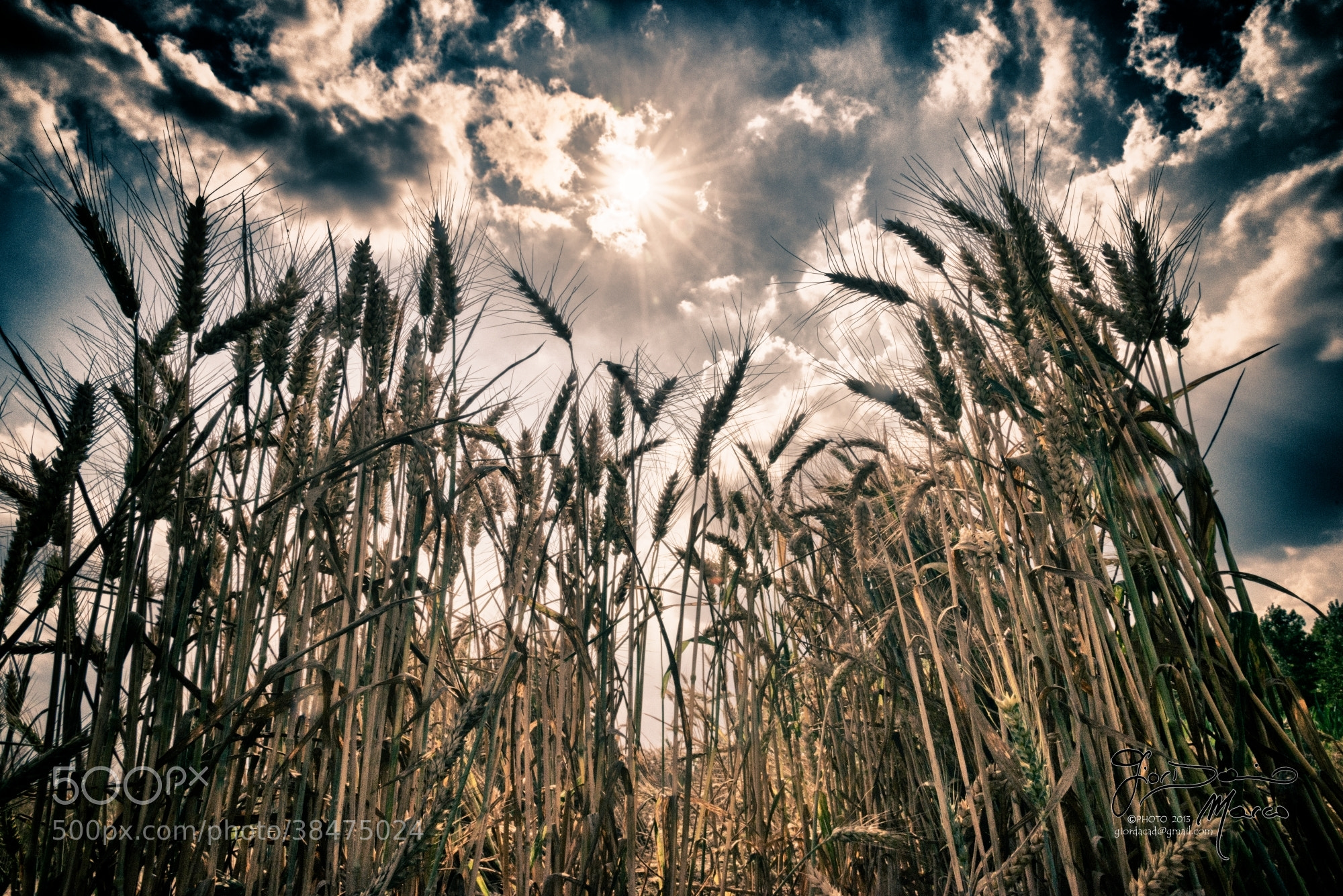 Photograph To the sky by Marco Giordanino on 500px