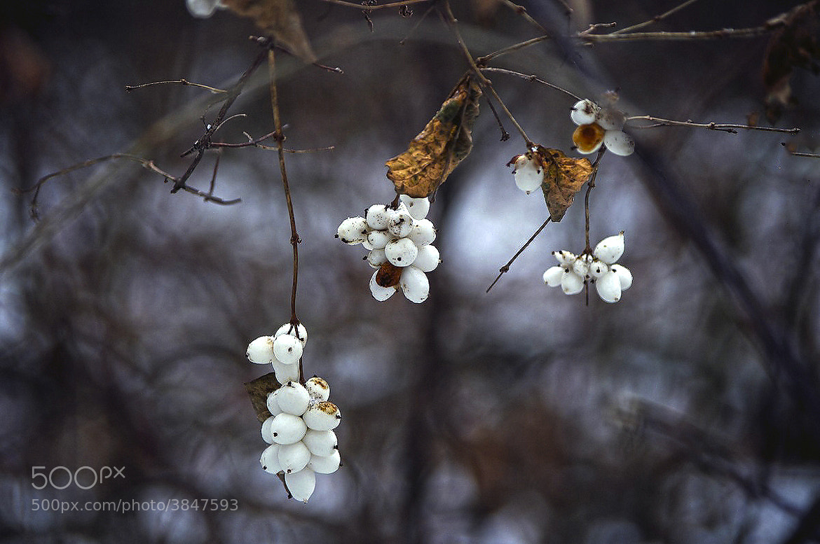 Photograph *** by I'm Olga on 500px