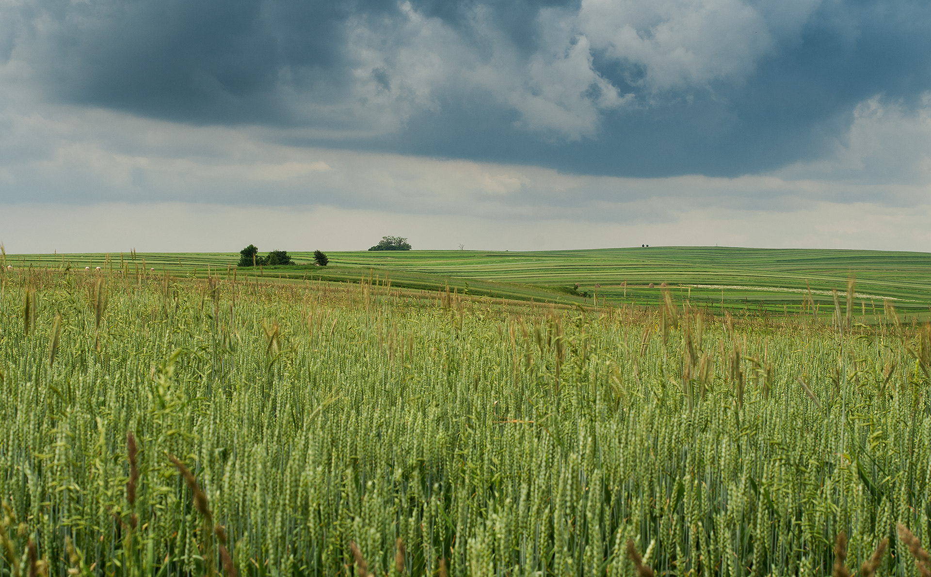 Photograph Fields by Selim Sykut on 500px