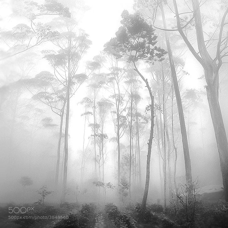 Photograph Tall Tree by Hengki Koentjoro on 500px