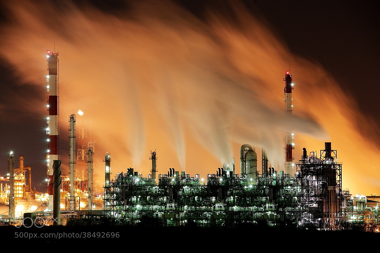Photograph Night view of plant by Bae Jong Baek on 500px