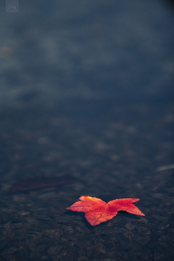 Photograph autumn by Andreas Geisen on 500px
