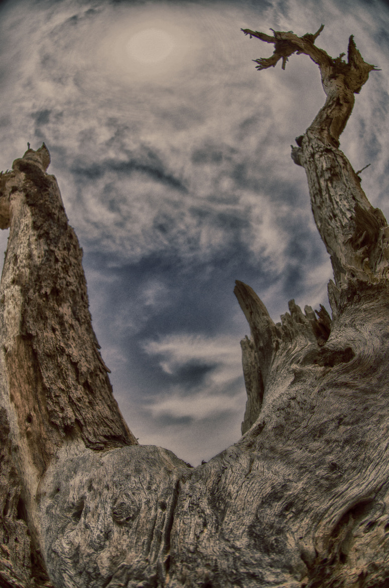 Photograph HDR - clouds and tree smile by Albert Bitton on 500px