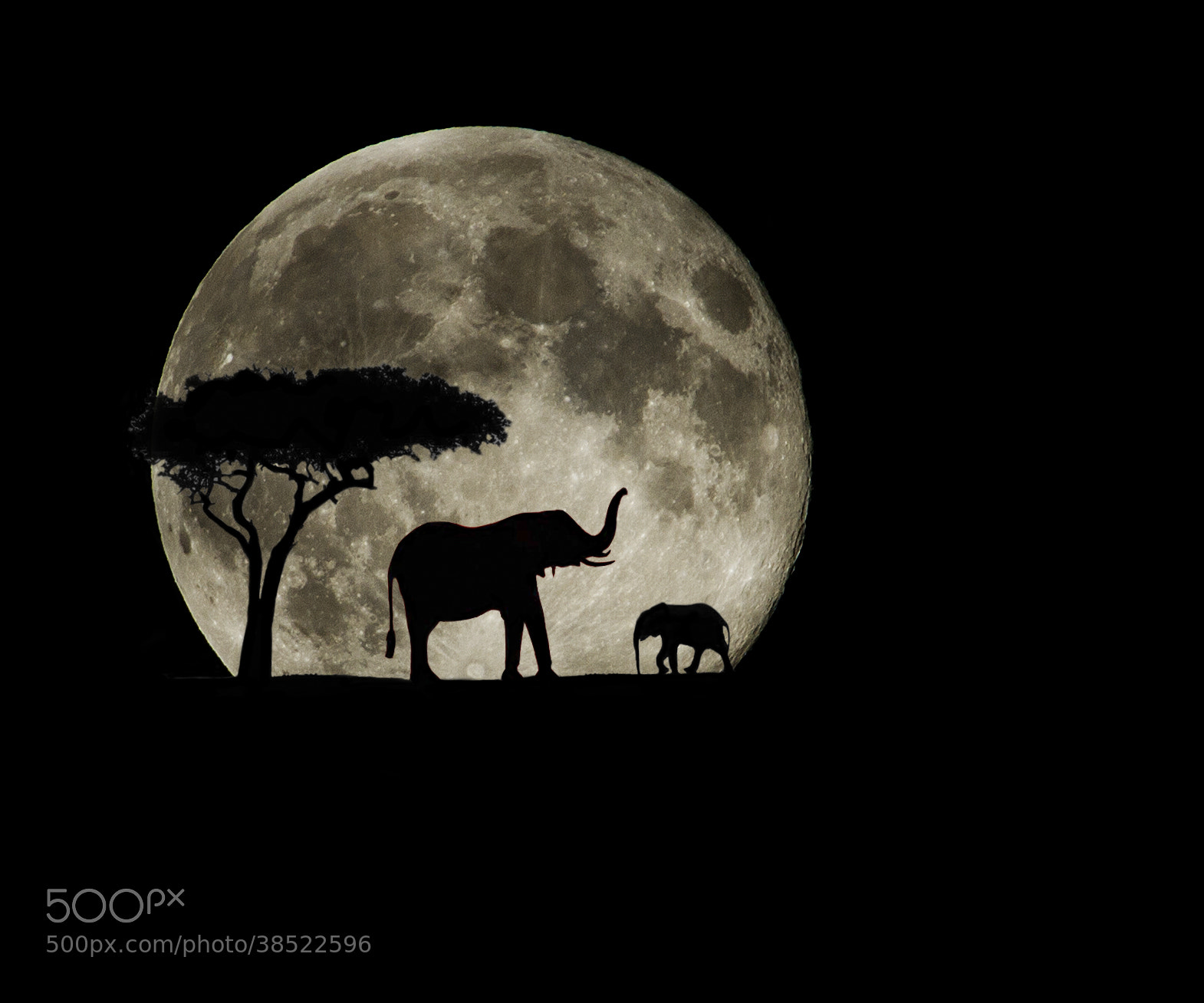 Photograph Super Moon Safari by Jay Rowe on 500px