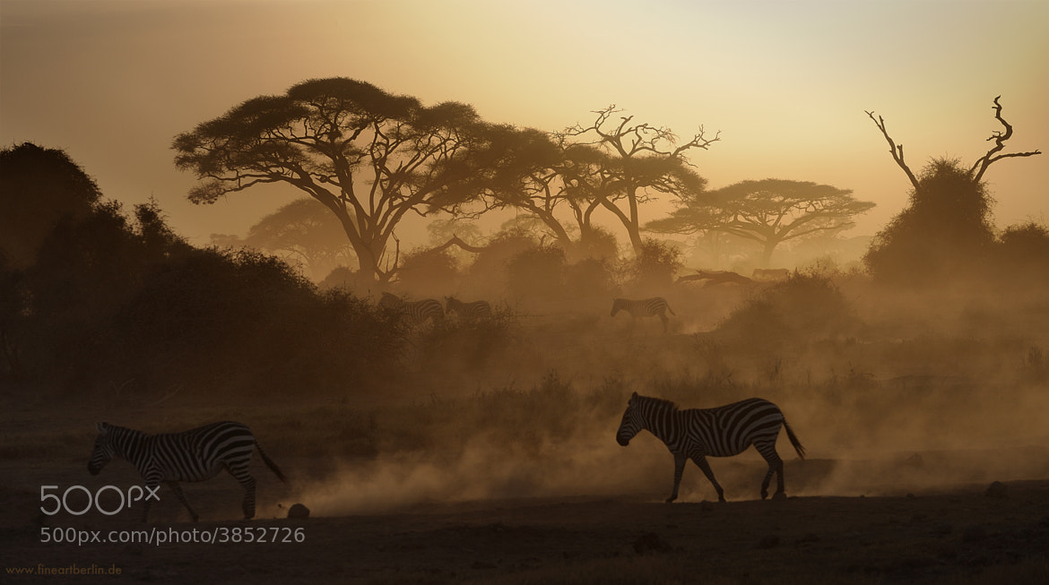 Photograph Out Of Africa by Cecilia Zawadzki on 500px