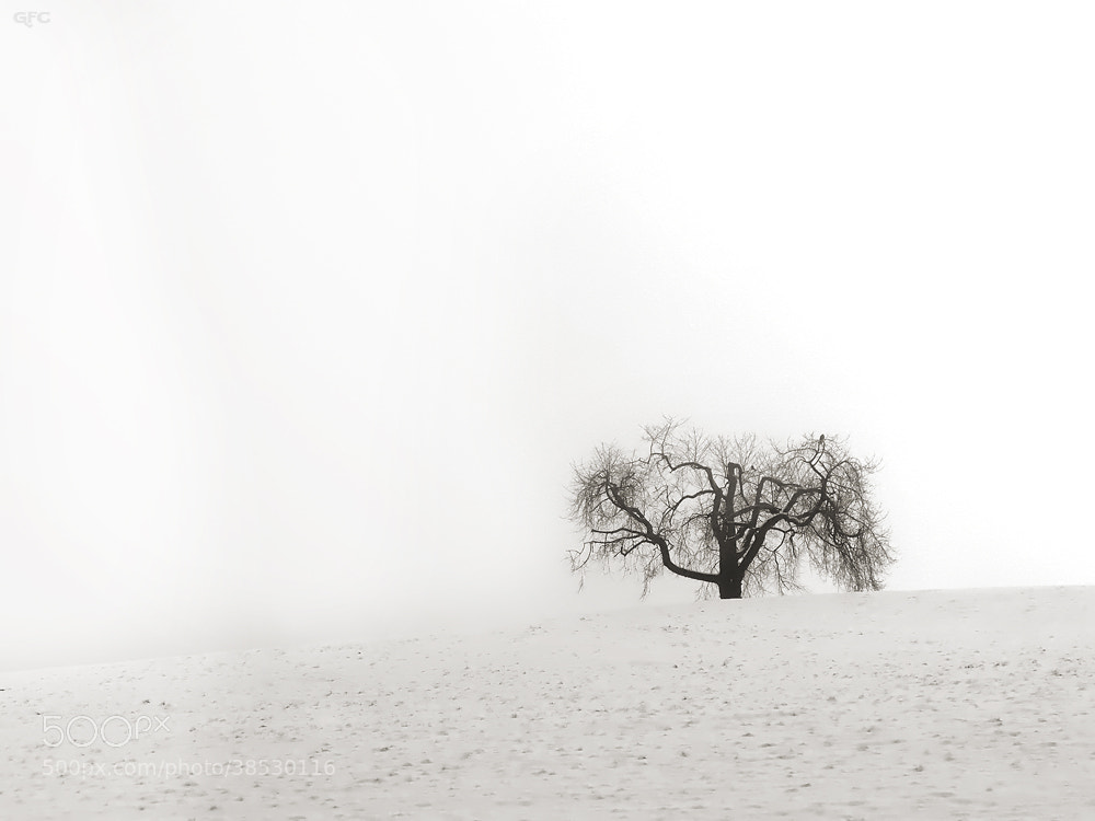 Photograph Ghost Tree by Gemma  on 500px
