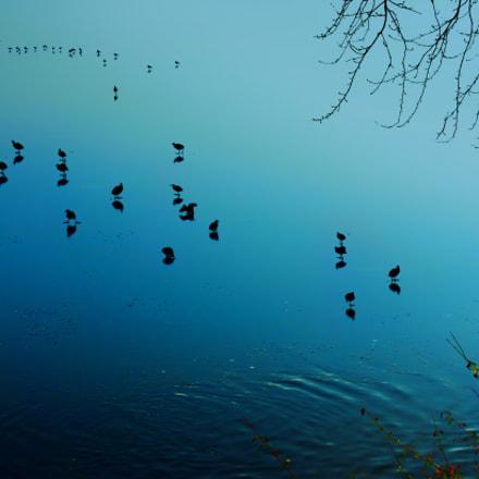 Birds walk on the rigid water