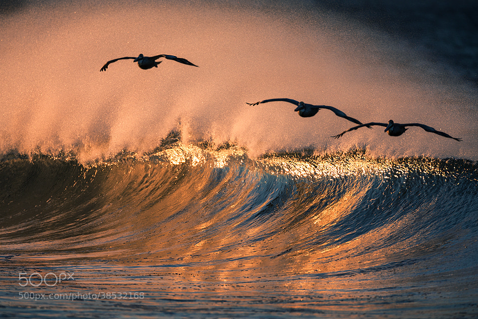 Photograph 73A2301 Riding The Wave by David Orias on 500px