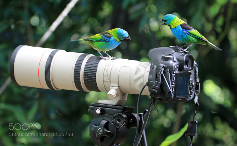 Discussing!  by Itamar Campos on 500px.com