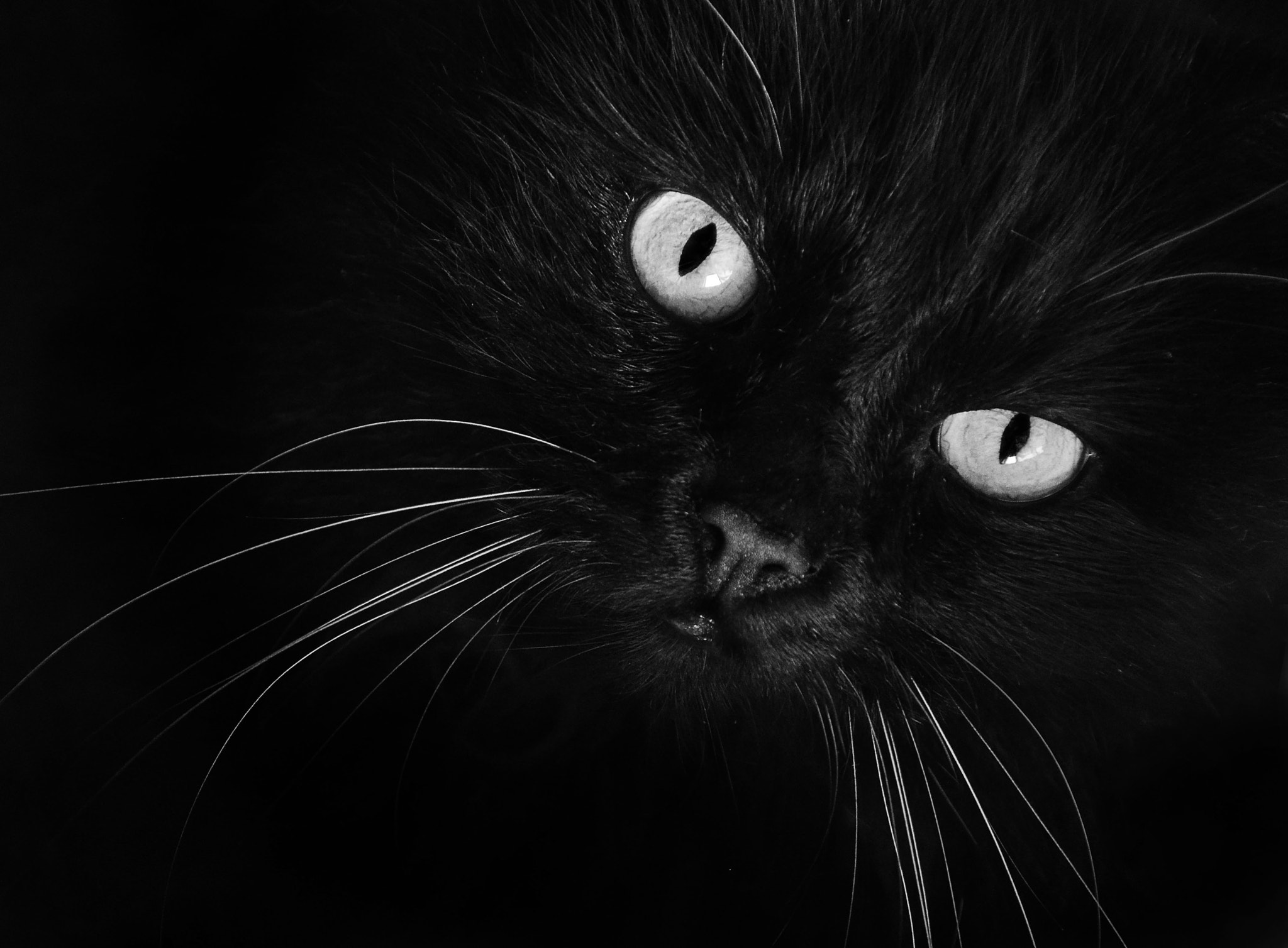 Photograph Black cat by Rebirth LG on 500px
