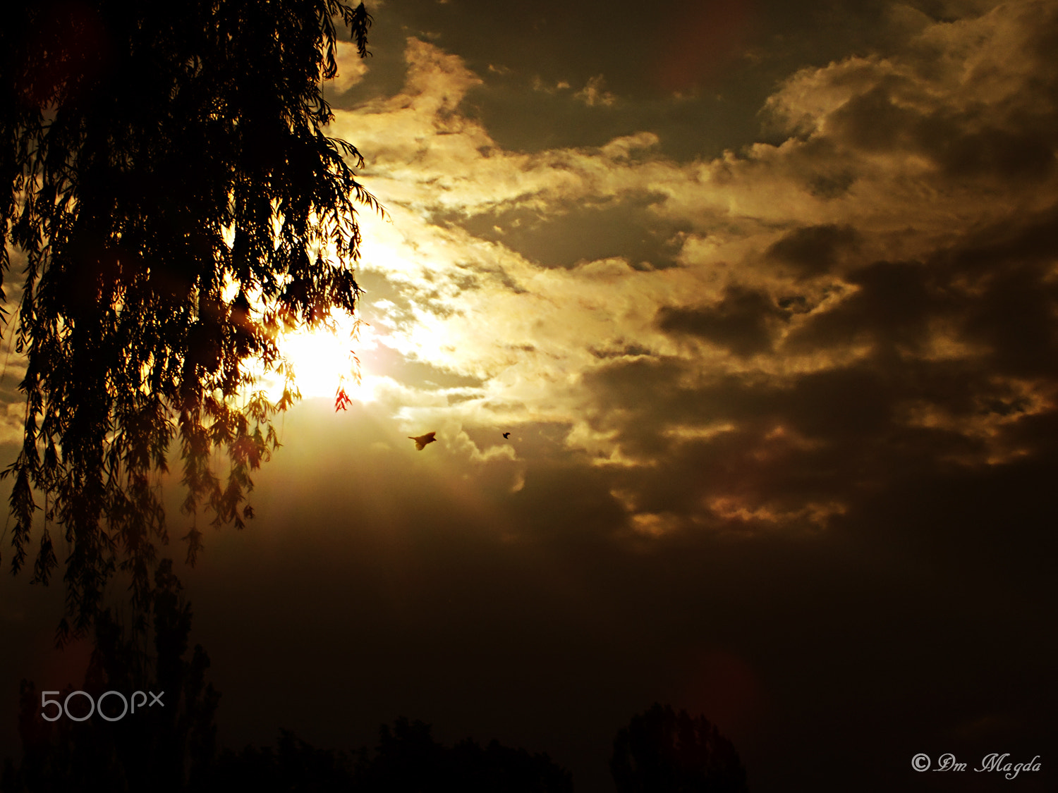 Photograph Summer sunset by magda dm on 500px