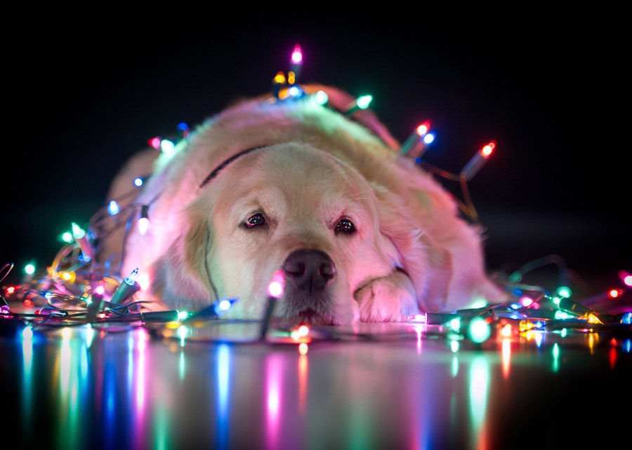 Photograph Merry Xmas by Mike Kremer on 500px