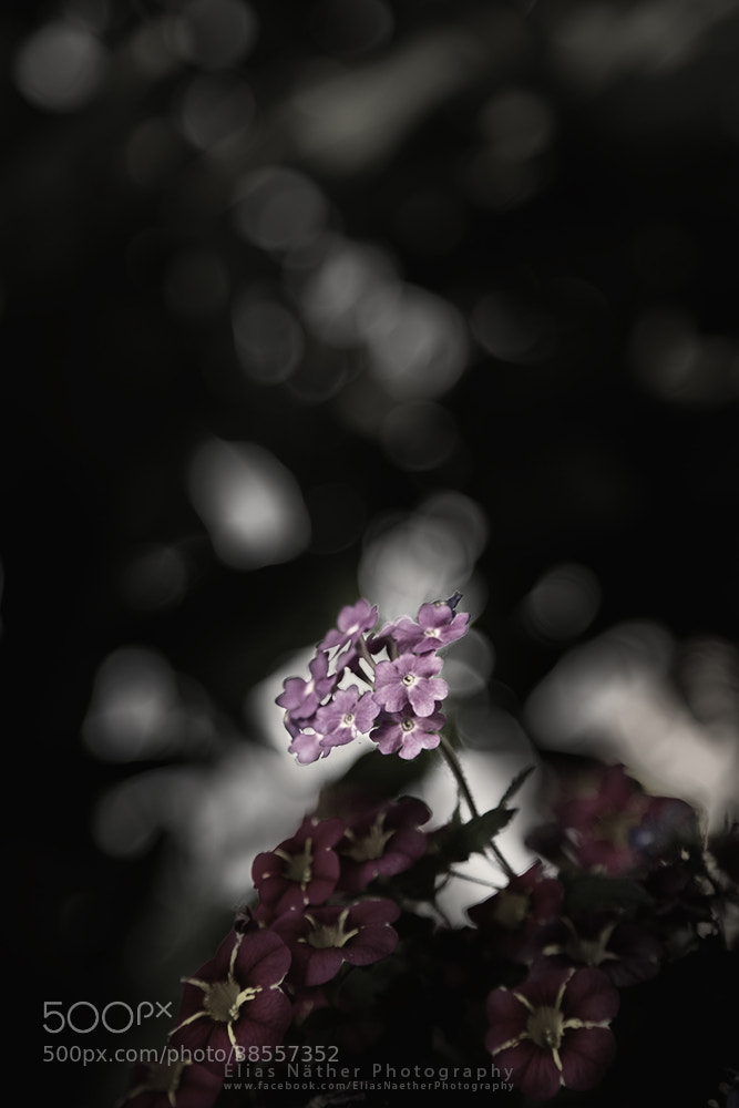 Photograph Little Flower by Elias Näther on 500px