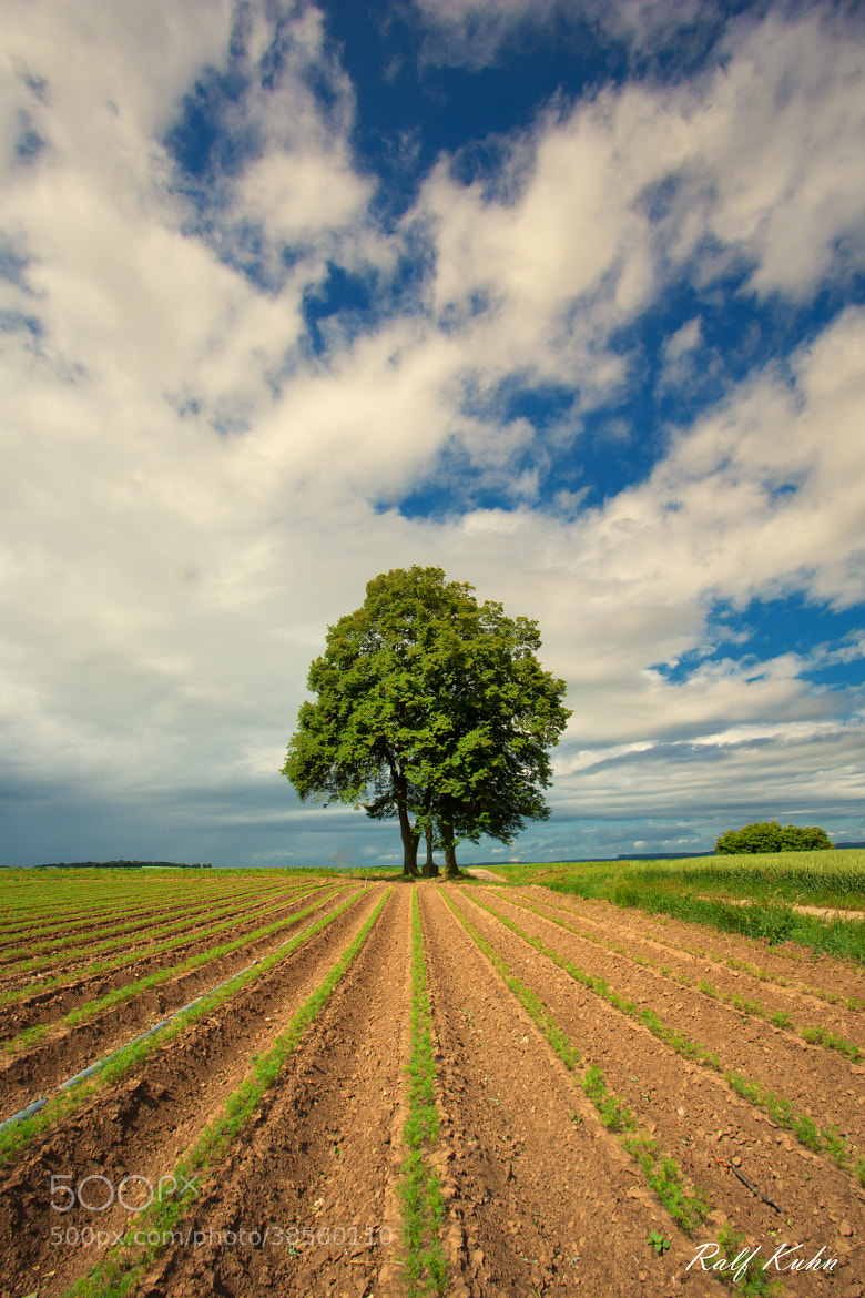 Photograph vegetable prays to the trees by Ralf Kuhn on 500px