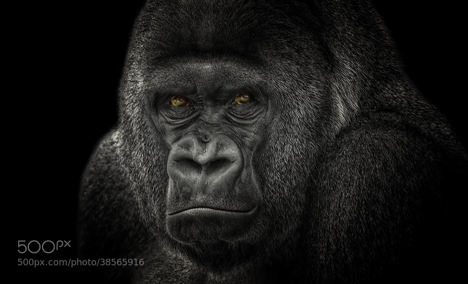 """Photograph """"Grand Master"""" by Johnny Brambach on 500px"""