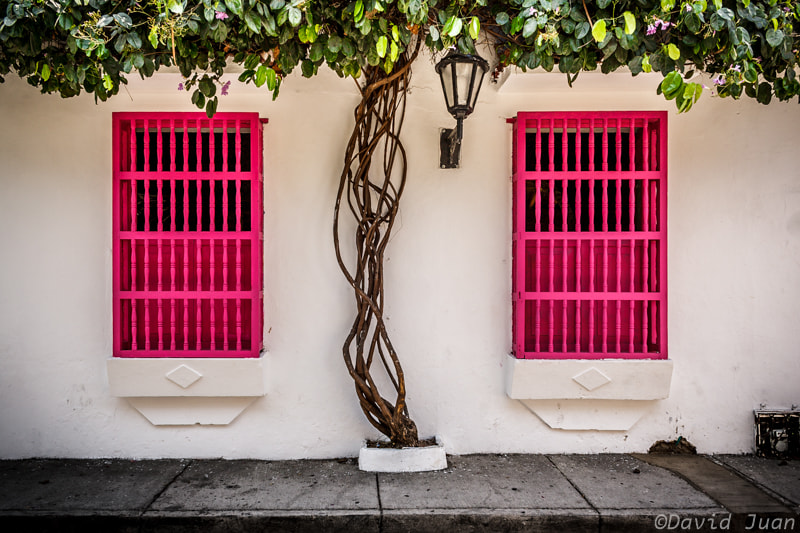 Photograph Pink & white by David Juan on 500px