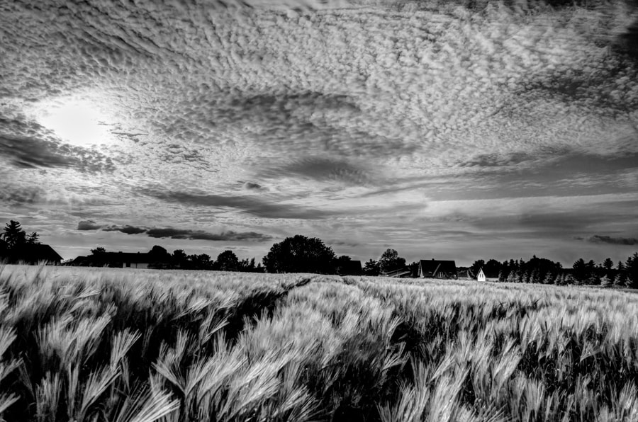 Photograph sky and corn by Gunter Werner on 500px