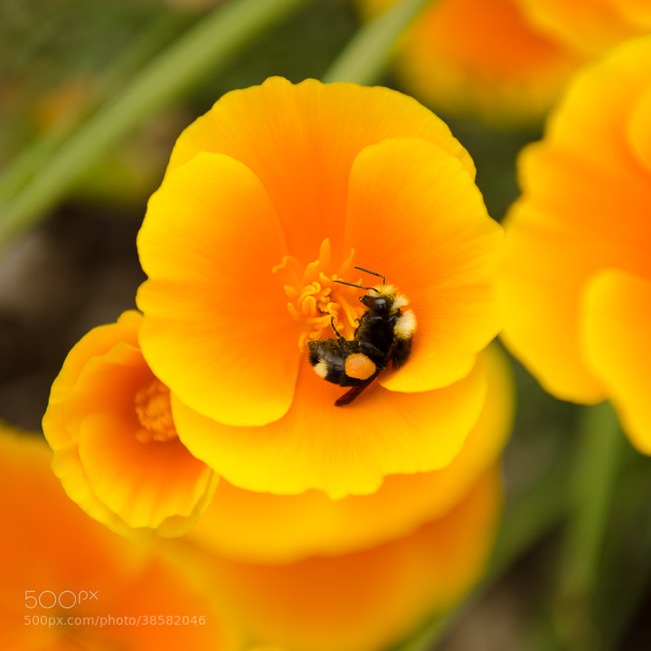 Photograph Bee Pollen Bath by LightStream  on 500px