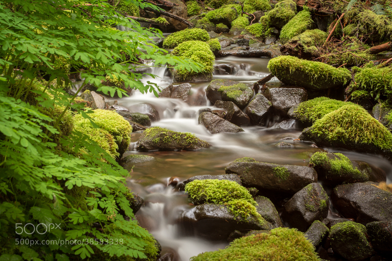Photograph Gently Down The Stream by Stevan Tontich on 500px