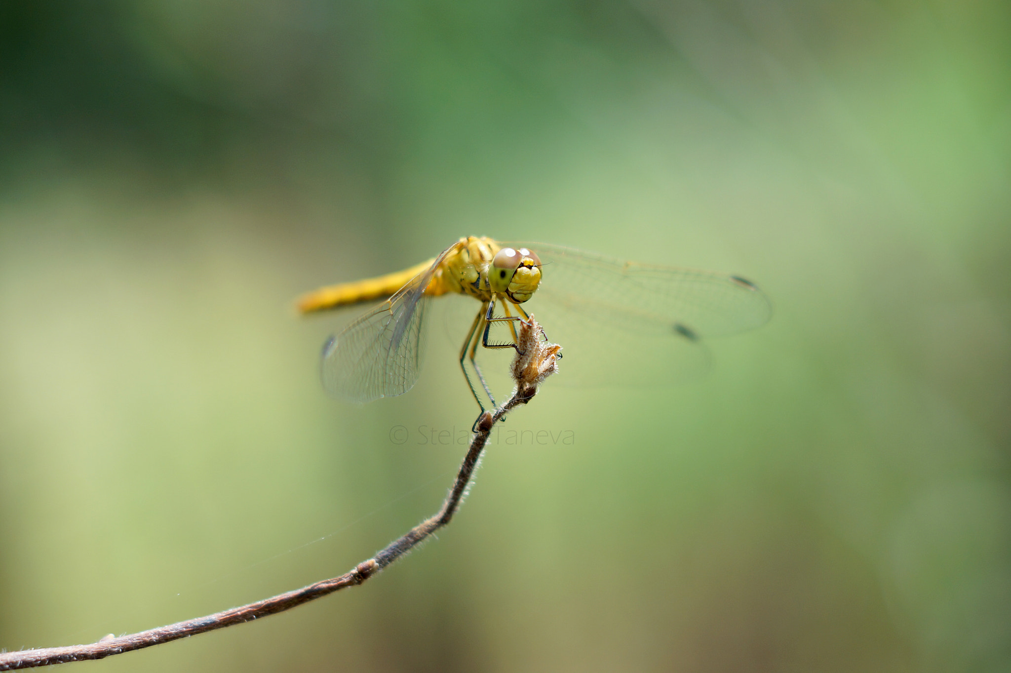 Photograph Happy insect by Stela Taneva on 500px