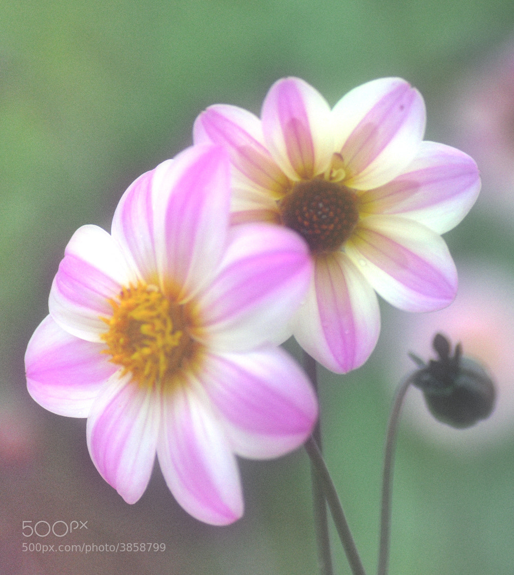 Photograph flower by keiji 403 on 500px