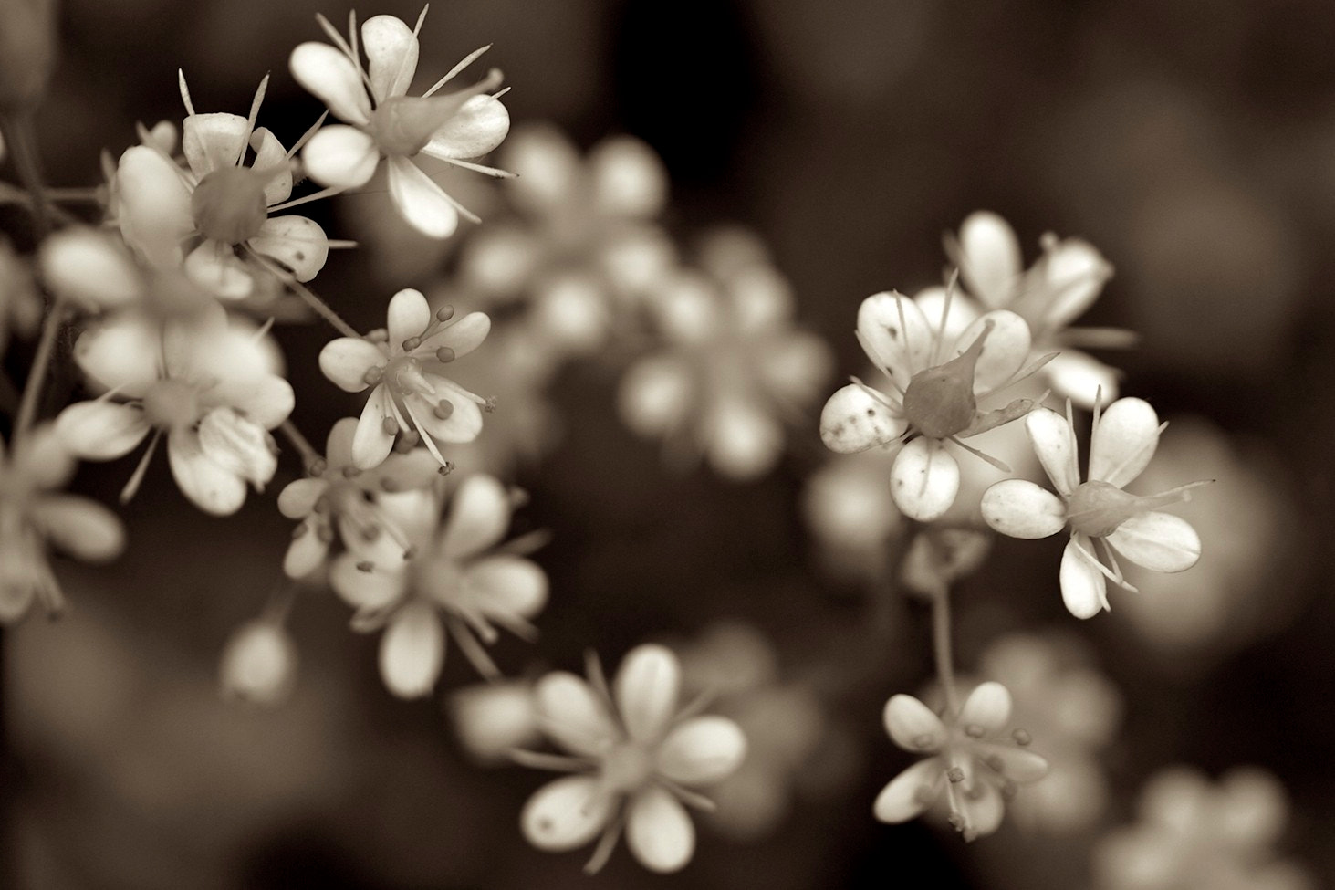 Photograph Pixie Stars by John Flick Purchase on 500px