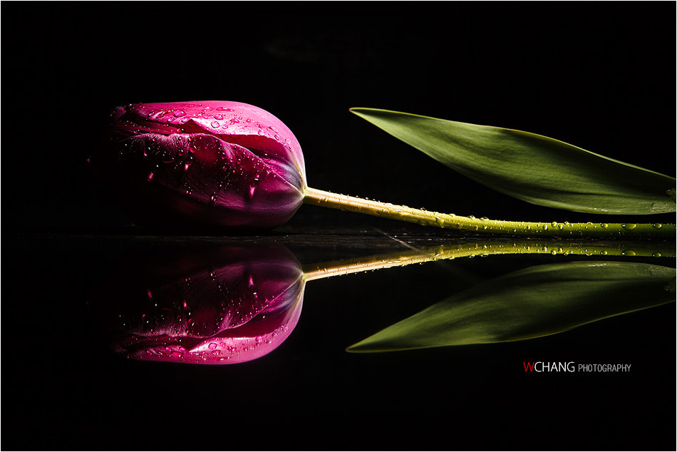 Photograph Reflection by Won Chang on 500px