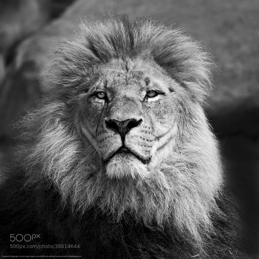 Photograph The King by K J on 500px