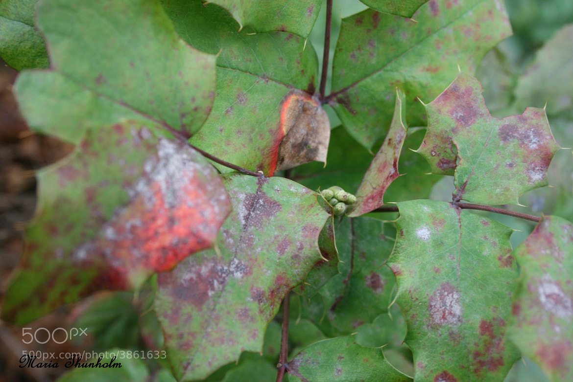 Photograph Feuilles mortes by Maria Thunholm on 500px