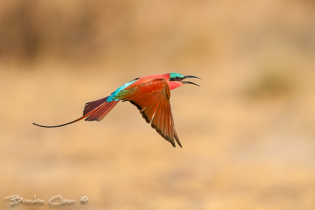 Photograph Kalizo Carmine by Brendon Cremer on 500px