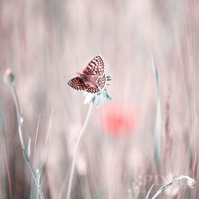 Photograph pastel moment by Pixel Passion on 500px