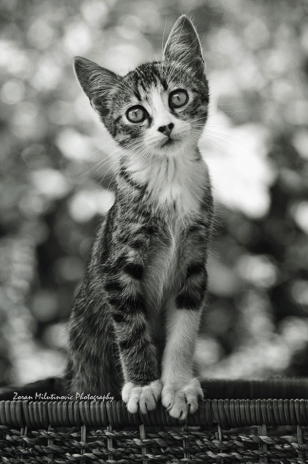 Photograph Standing tall by Zoran Milutinovic on 500px
