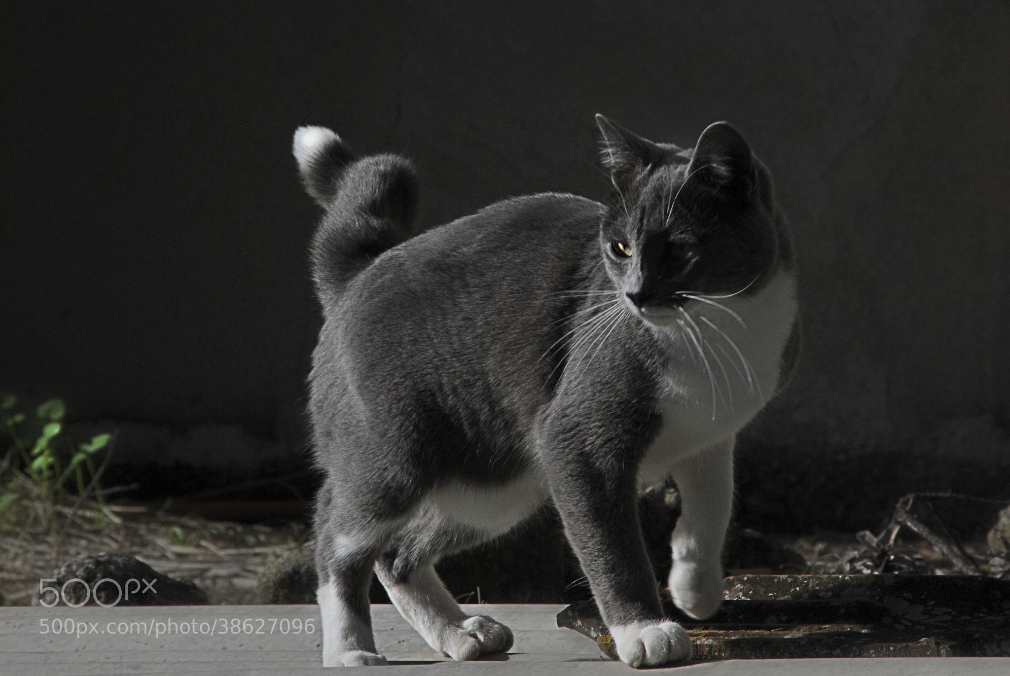 Photograph Cat by Fabio La Monica on 500px