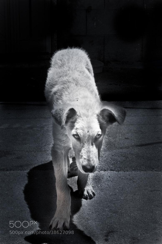 Photograph Dark Dog by Fabio La Monica on 500px