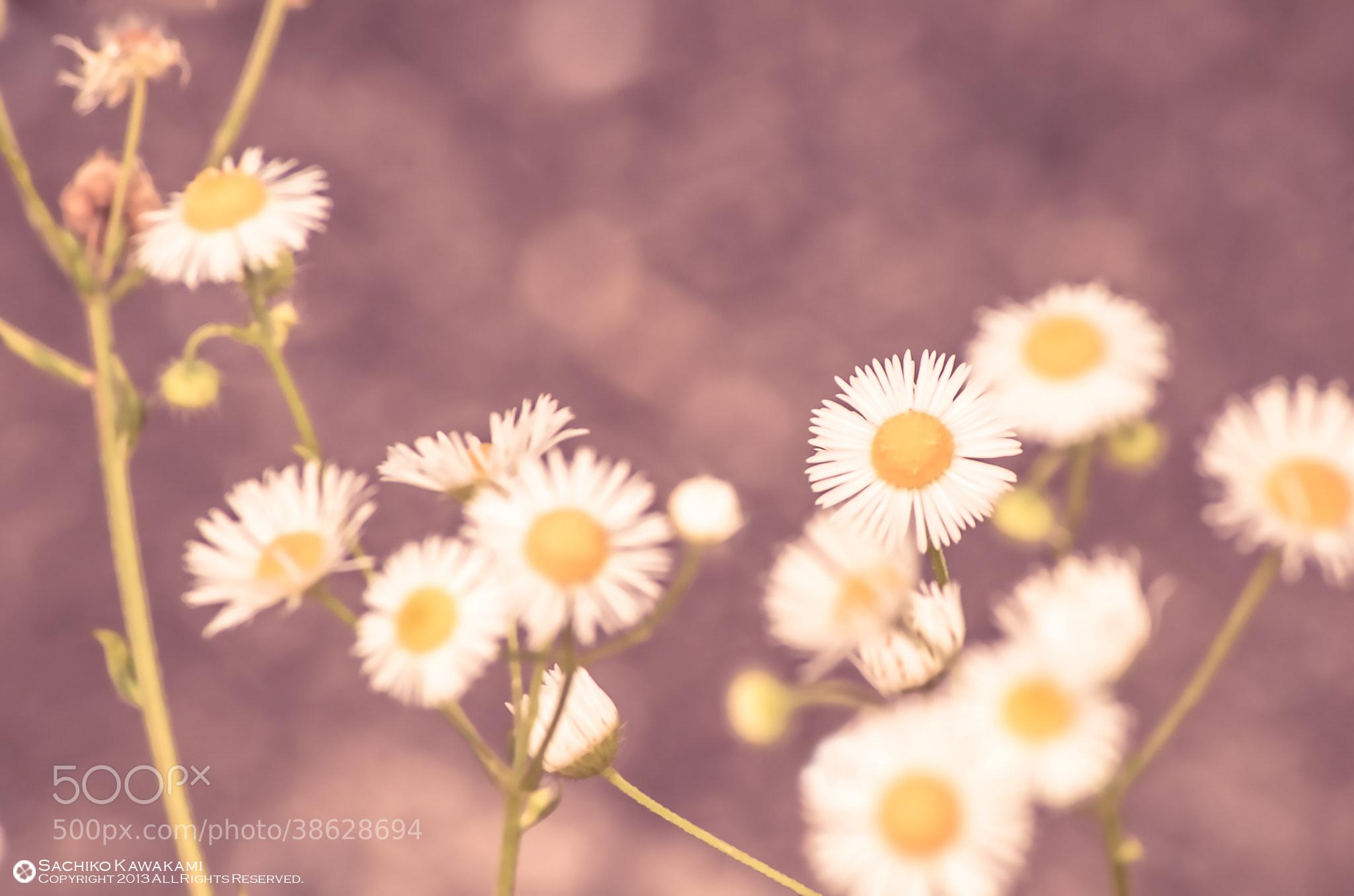 Photograph 風に吹かれて by Sachiko Kawakami on 500px