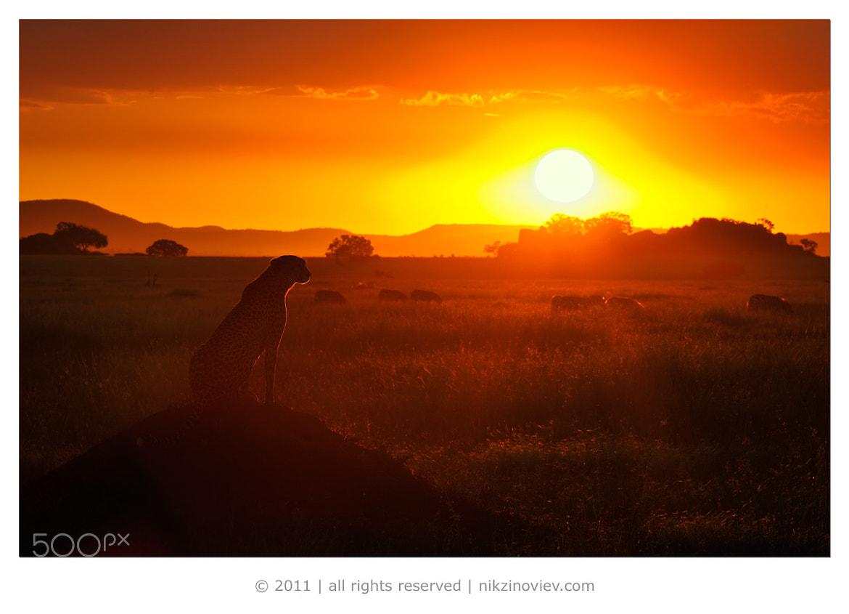 Photograph Savanna sunset by Nikolai Zinoviev on 500px