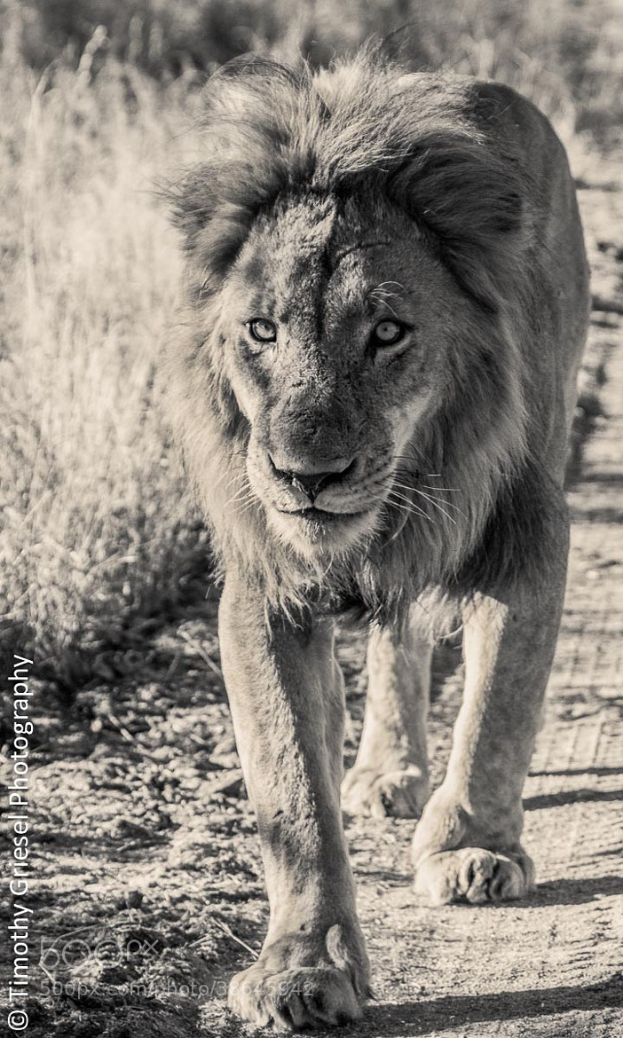 Photograph Determined Male by Timothy Griesel on 500px